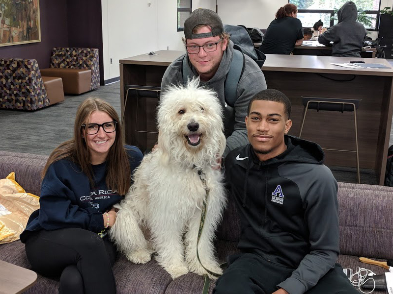 Kai the Therapy Dog hangs with some students at the Library